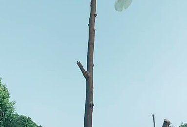 TikTok से निकला टिड्डियों को भगाने का ये देशी जुगाड़, जरूर देखें