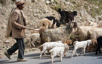 चरवाहे को हुआ कोरोना तो 47 बकरियों को कर दिया क्वारंटीन, जरूर पढ़ें